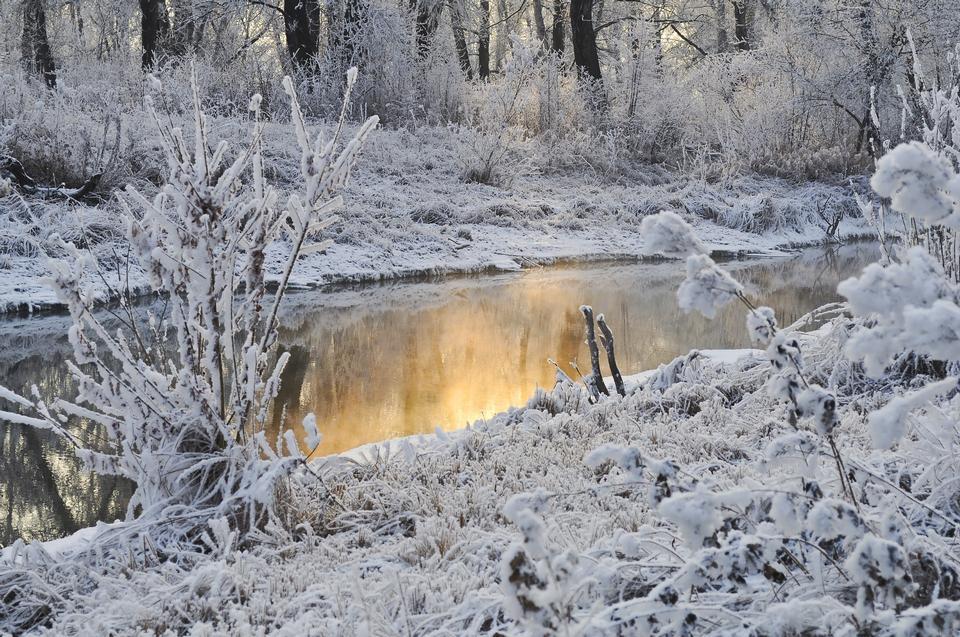 Los árboles en la nieve del invierno
