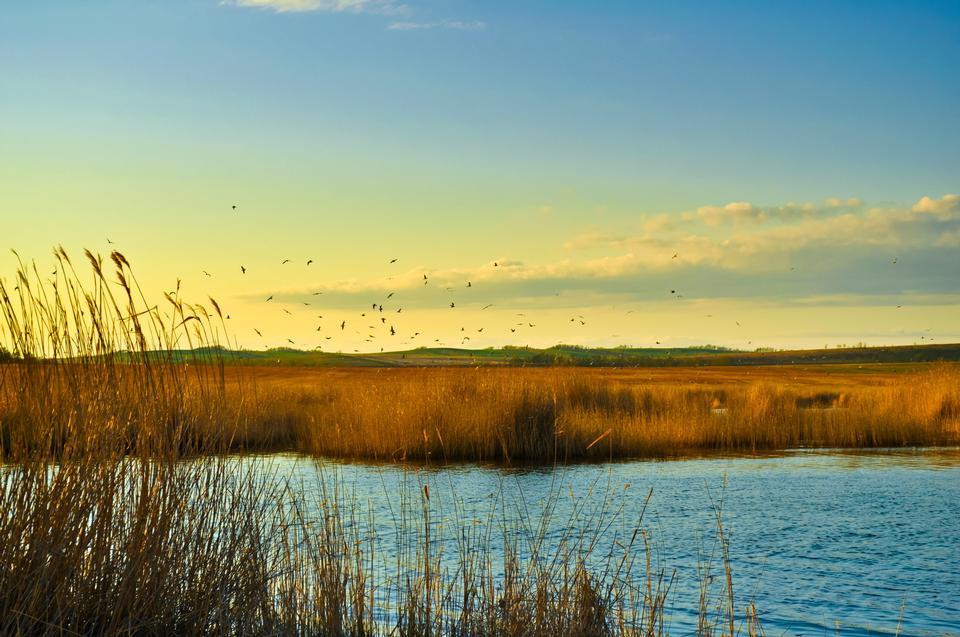 talos de junco e pássaro no pântano contra a luz solar