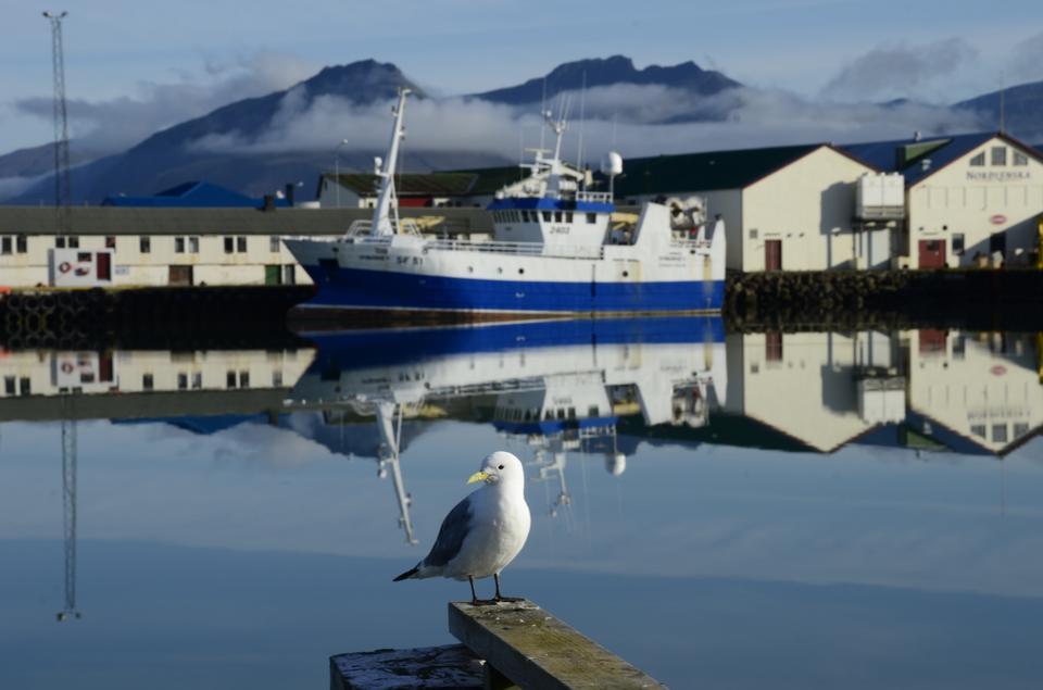 seagull near a dock in the center
