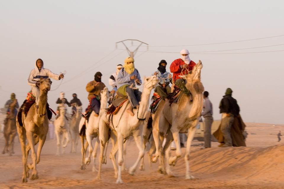 骆驼赛在瓦尔格拉,南阿尔及利亚