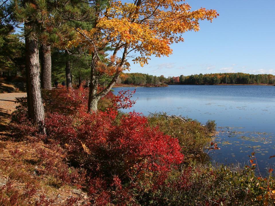 Herbst Fahrweg Farben Acadia National Park