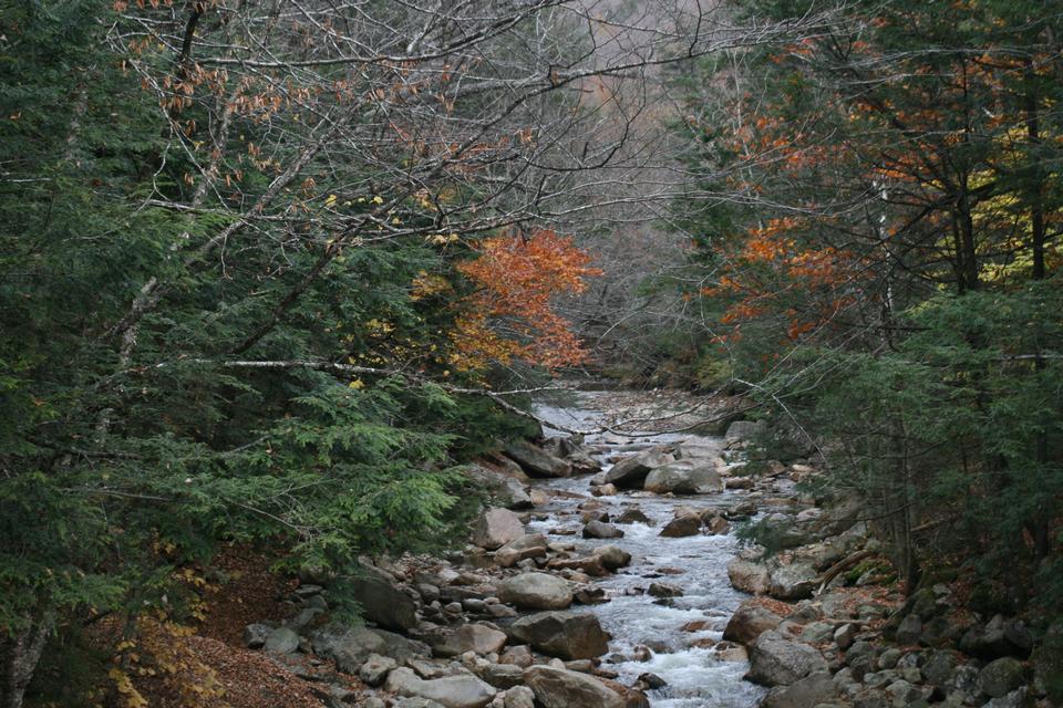 白い山のエリアにニューハンプシャー州の秋のストリーム