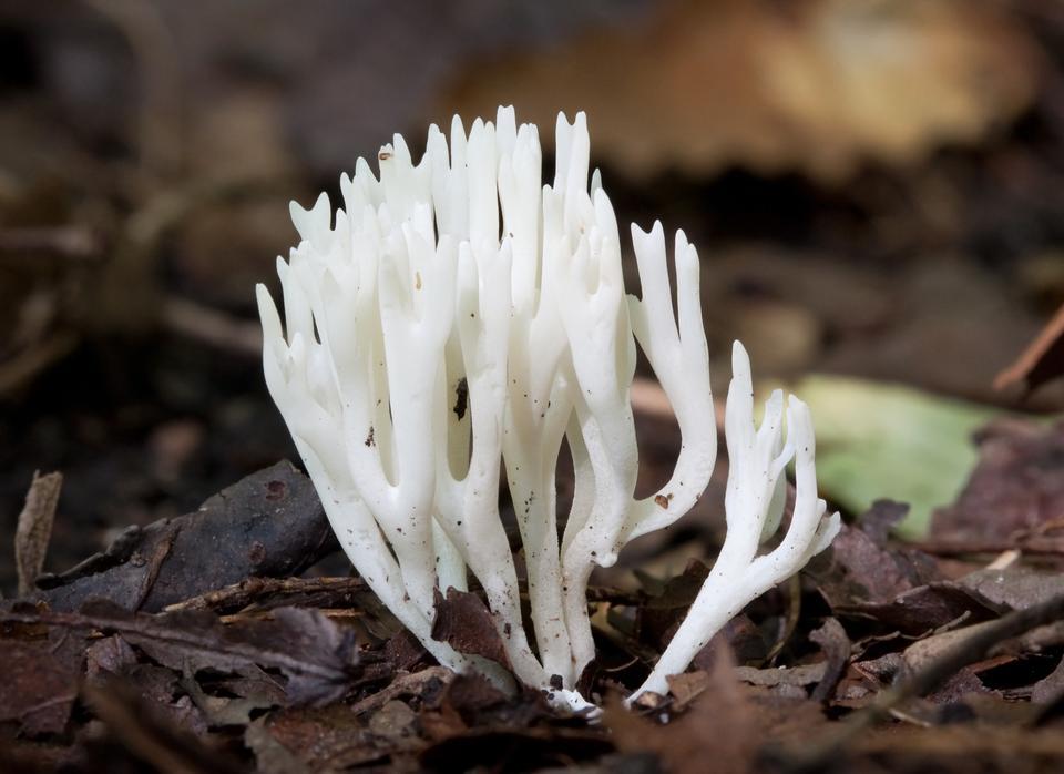 야생 숲에서 버섯