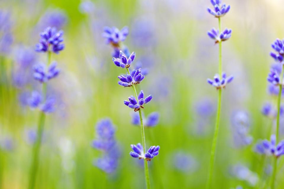 花和背景虚化