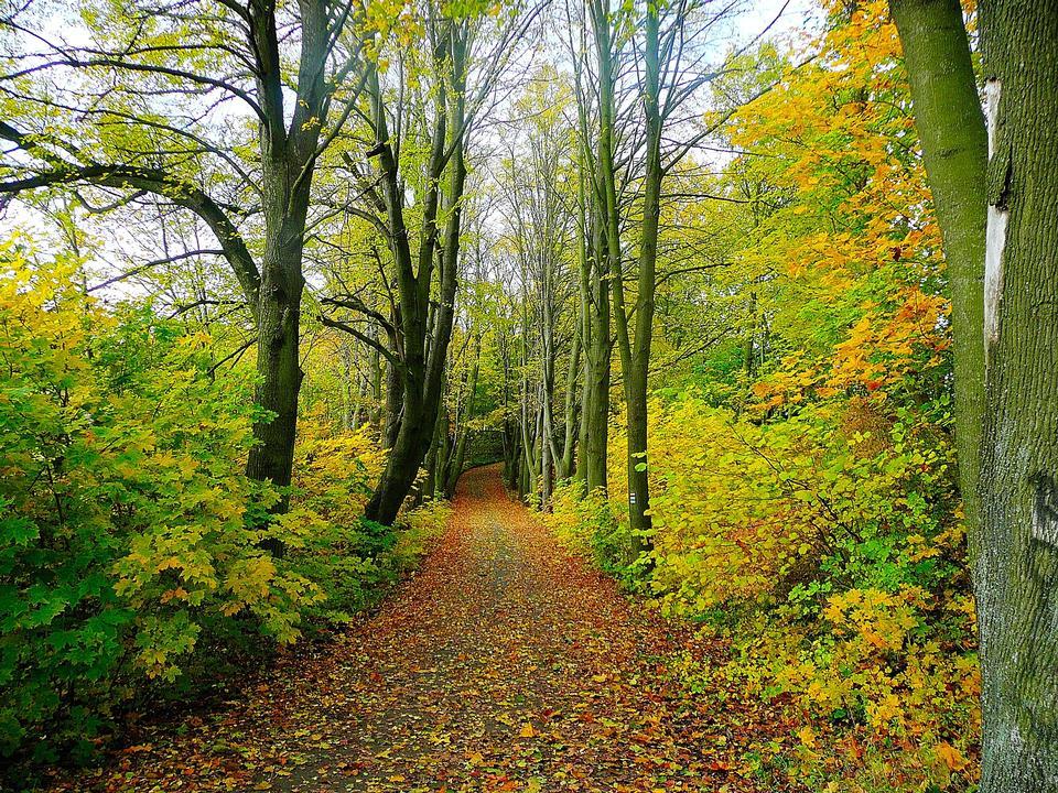 秋のパスウェイ