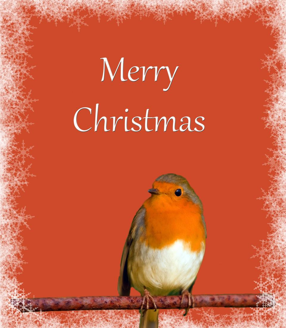 Christmas Card Robin Snowflakes