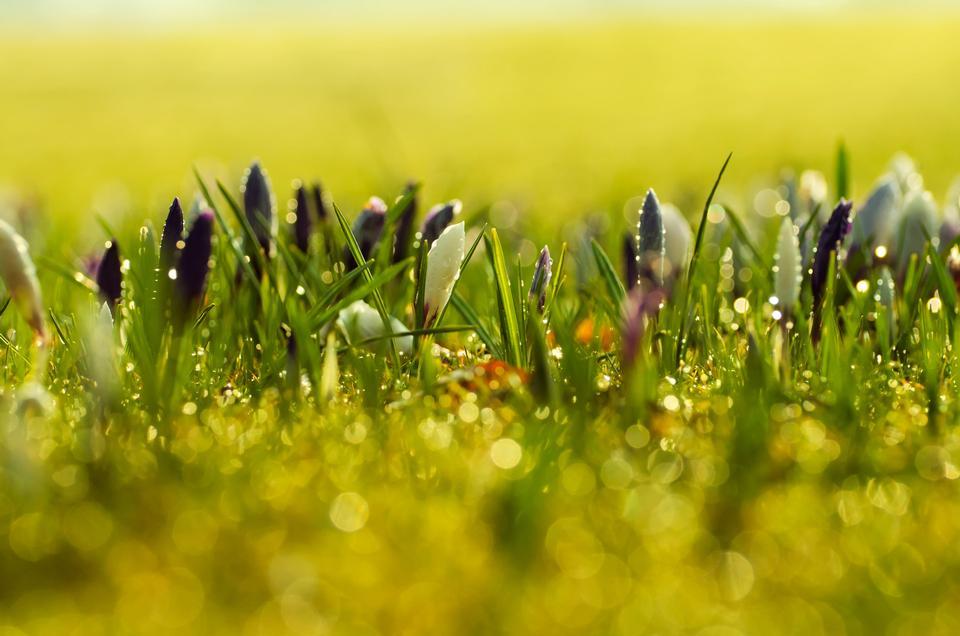 迎春花背景