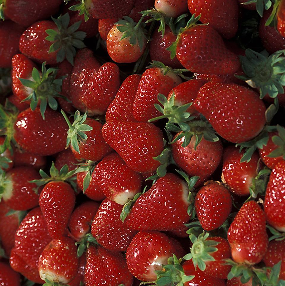 レッドチャンドラーイチゴの束