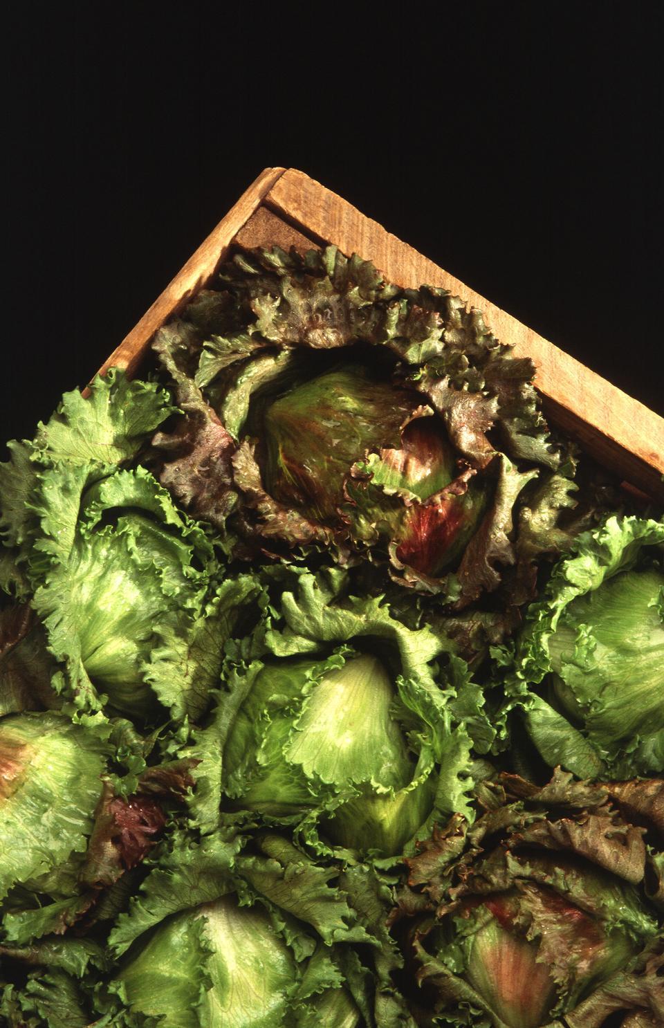 头的生菜在木箱