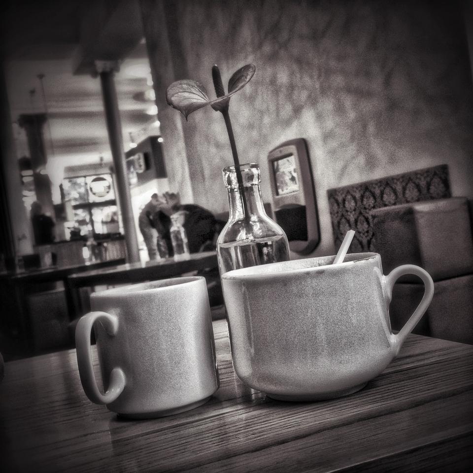 Os grãos de café