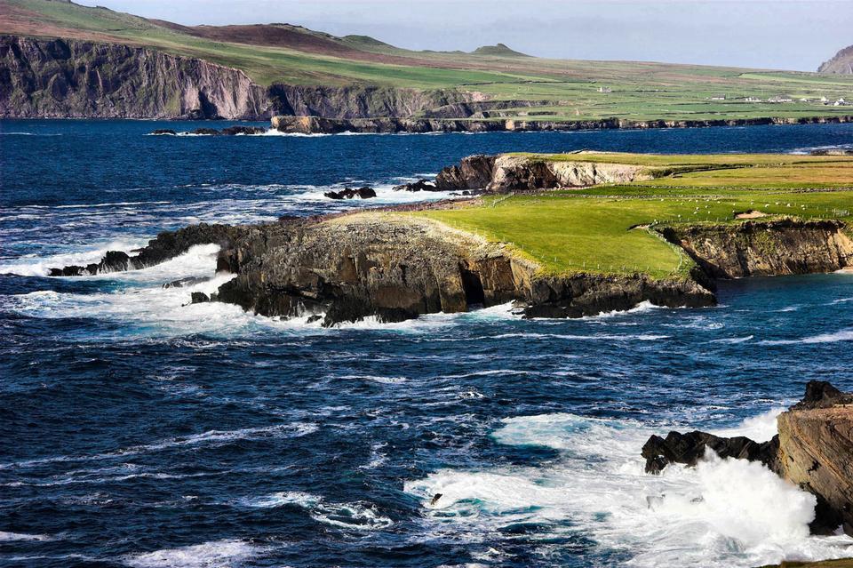 Pecore al pascolo sulla costa sud-ovest dell'Irlanda