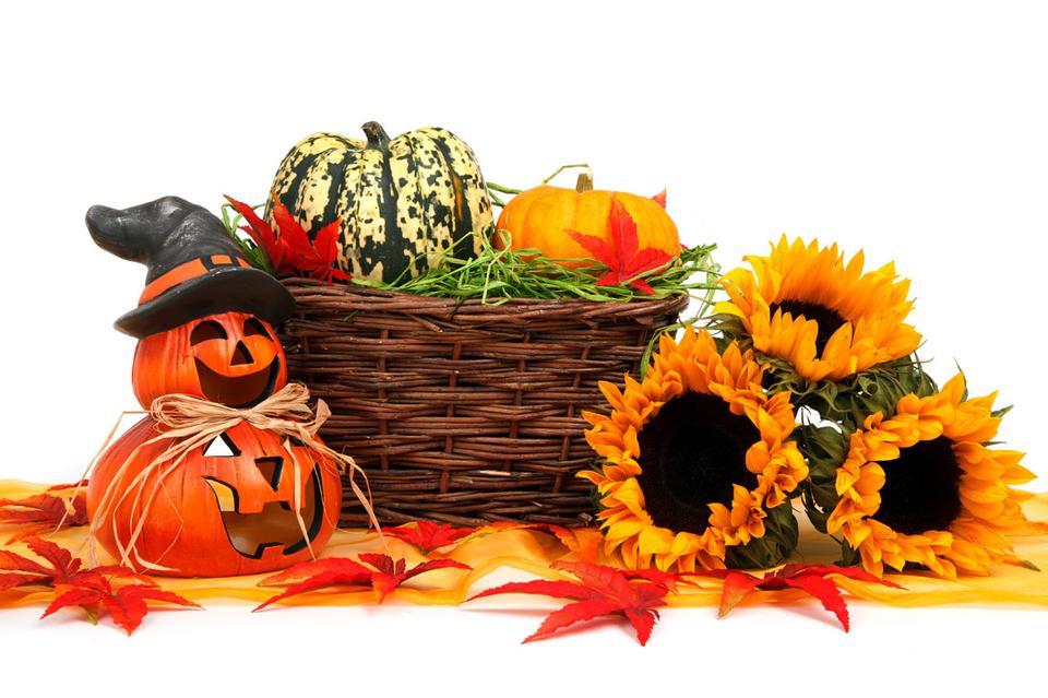 hallowen la calabaza con la cosecha de otoño y girasoles