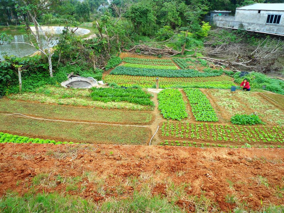 A small vegetable farm in rural Hainan Province, China