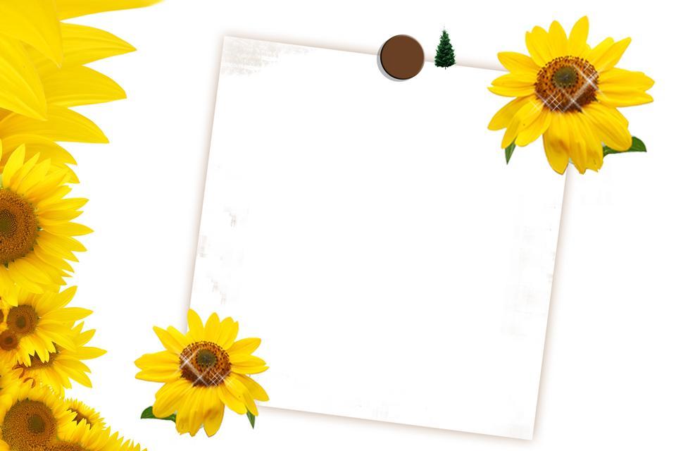 해바라기와 초대 또는 축 하 카드