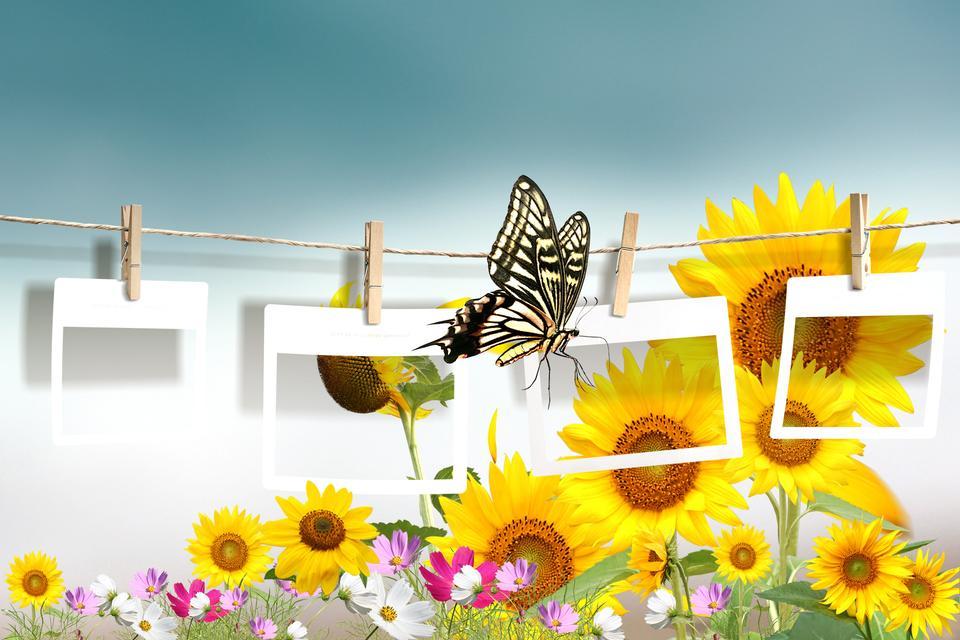 黄色的花朵和蝴蝶复古照片拼贴