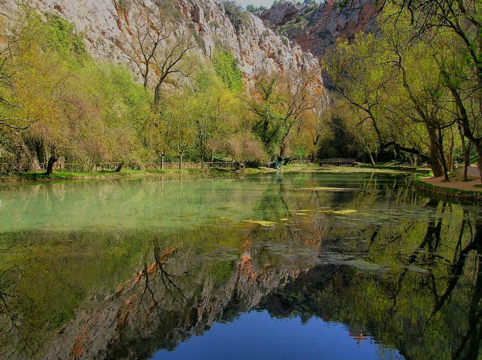 Синее небо, дерево отражается в озере