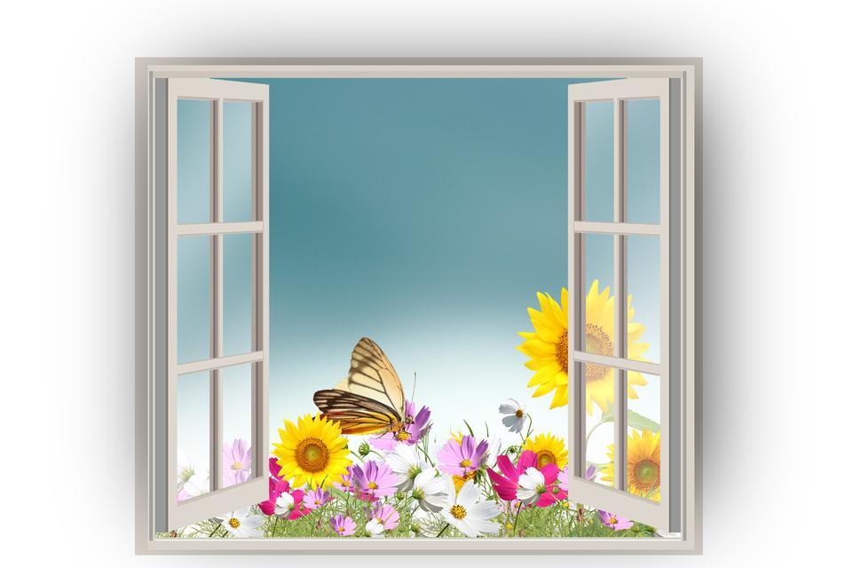 花と蝶とのオープンウィンドウ