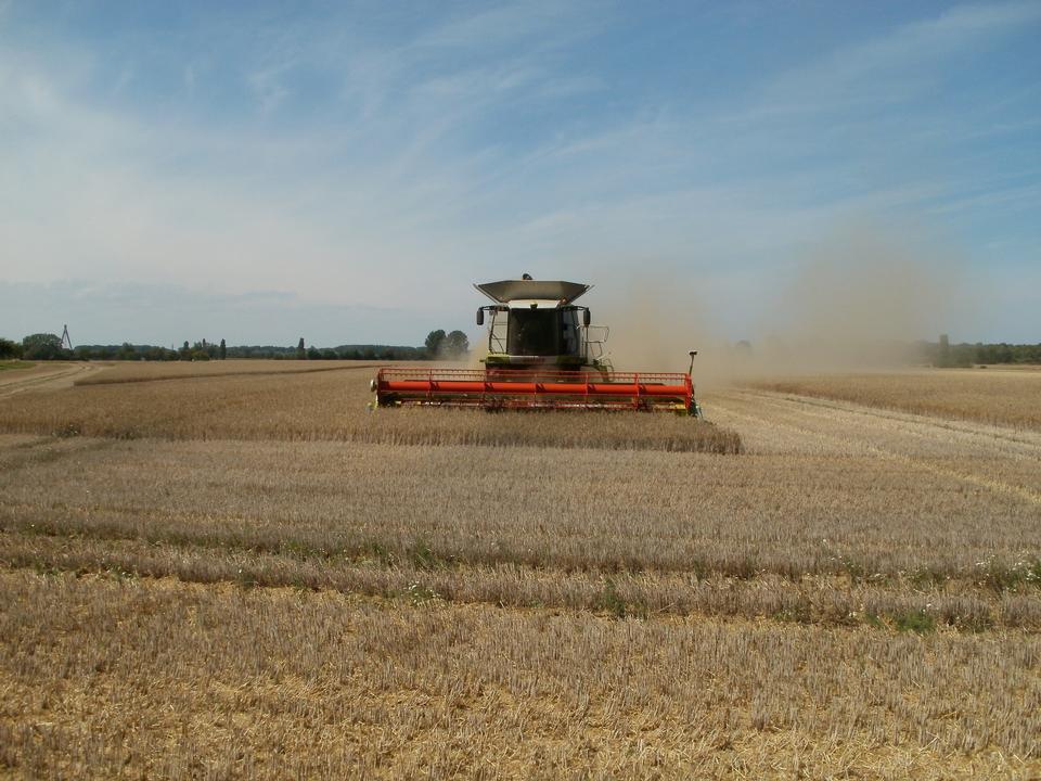 机收获玉米地
