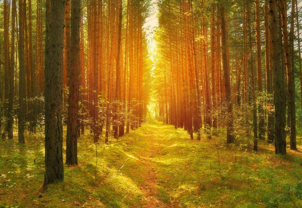 早朝の太陽の光の中サニー森
