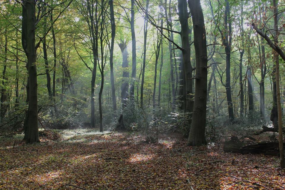 Morgen in den Wald