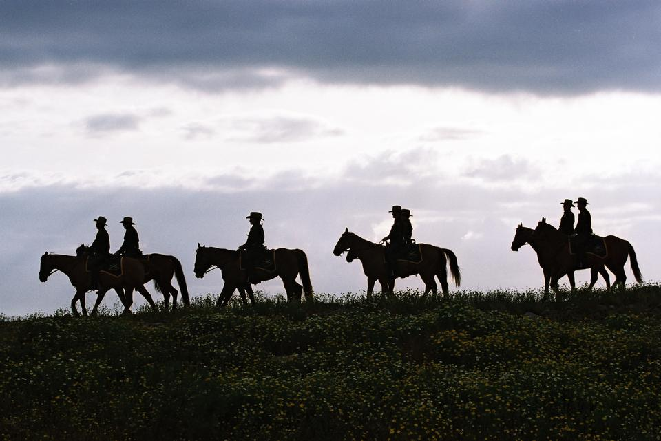 牛仔剪影在夕陽馬