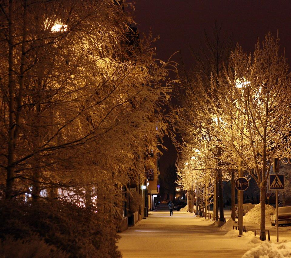 Snowy avenue with trees with street lights