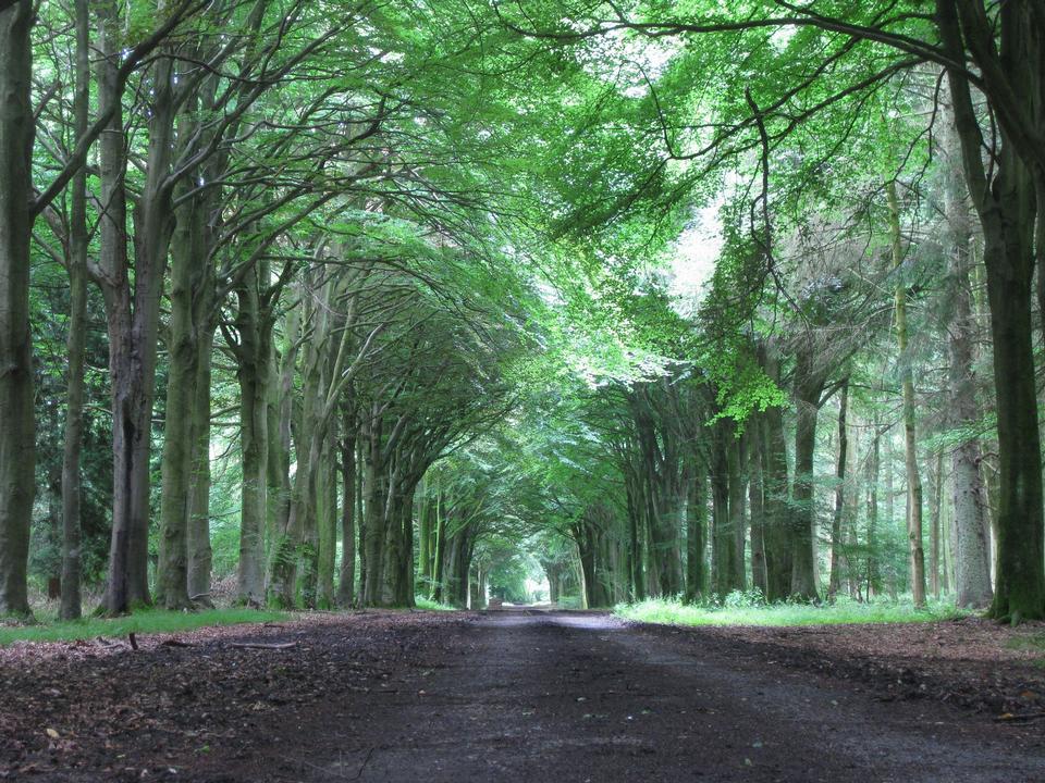 鄉村公路通過樹胡同運行