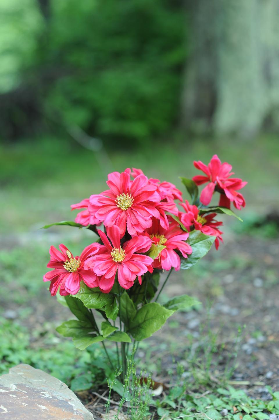 ドリーのSOD野生の花
