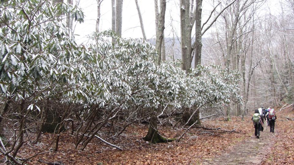 多莉草皮大Stonecoal开拓者冬季野营