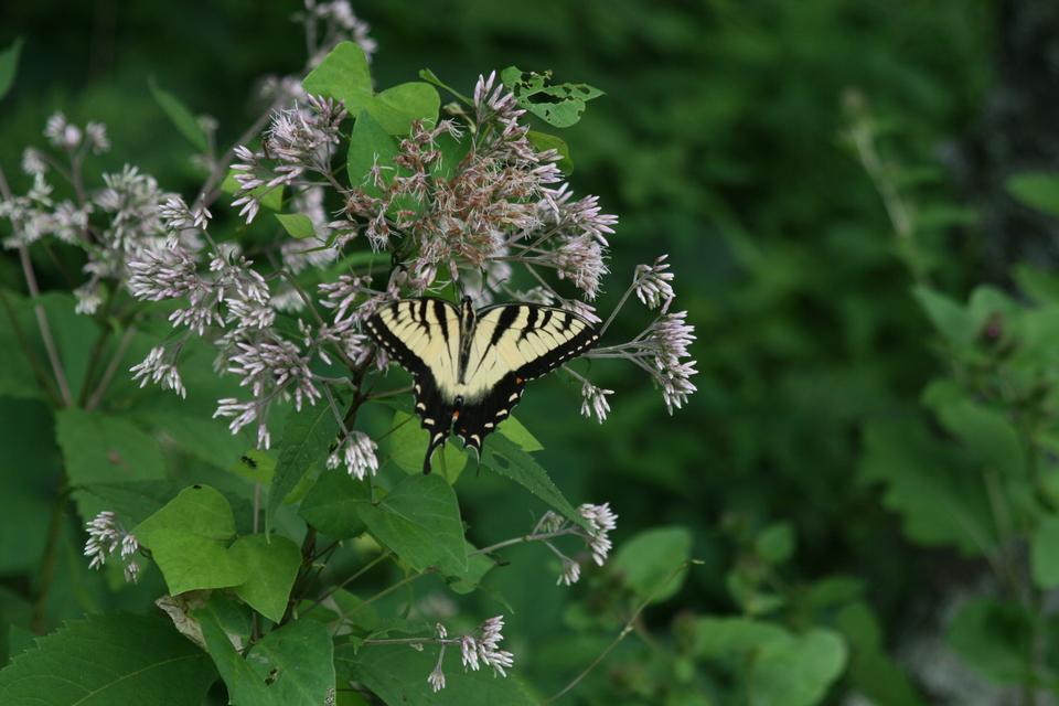 Papillon sur les fleurs