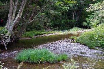 Descarga gratis la imagen de alta resolución - Senderismo Monongahela National Forest