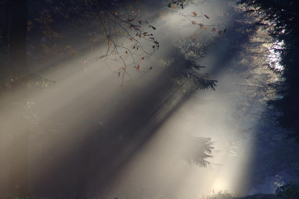 Солнечный луч Туман Лето Природа Солнечный свет