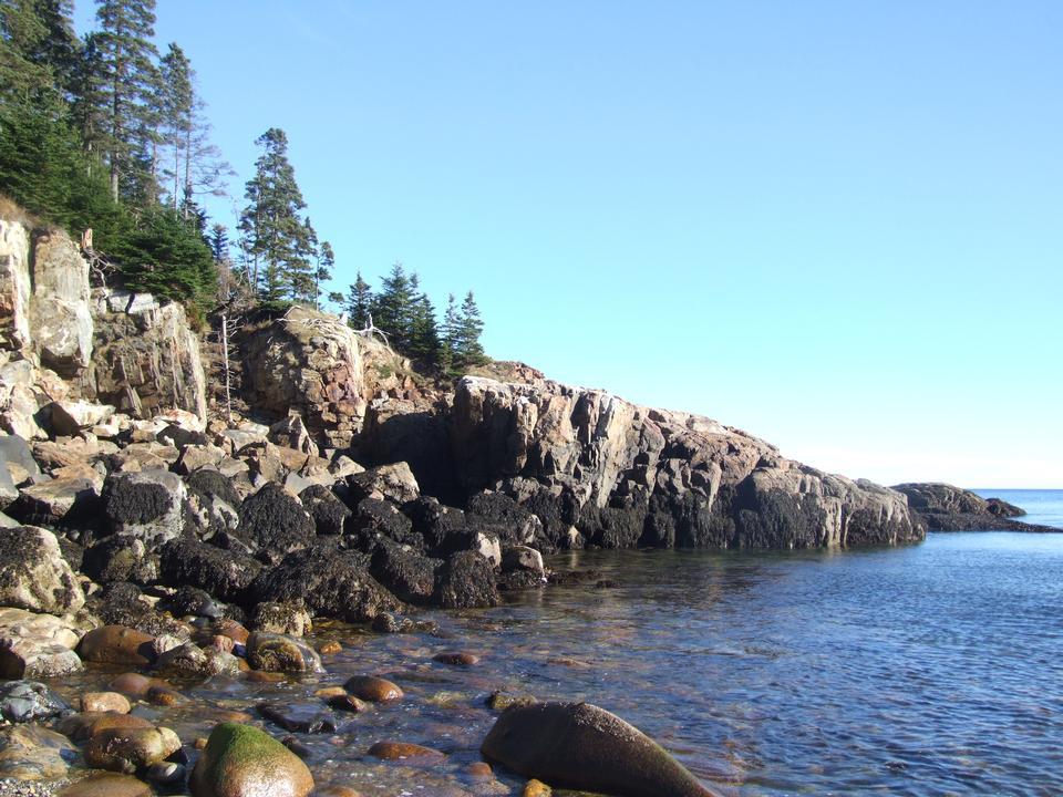 アカディアシーショア花崗岩と森