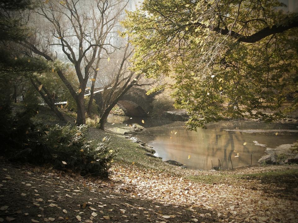 弓桥秋天中央公园,纽约