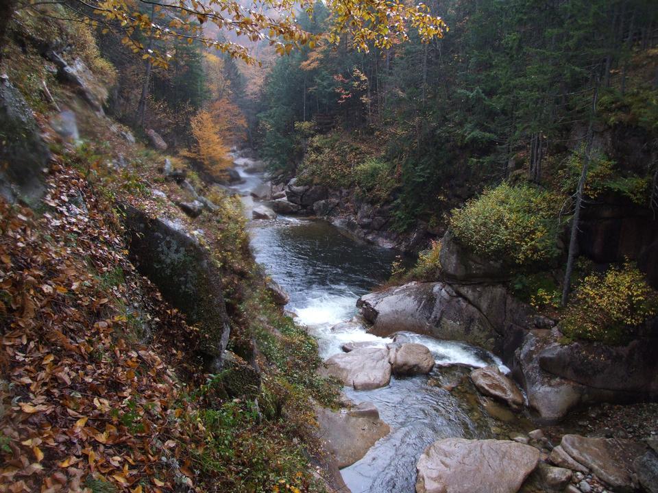 White Mountains feuillage d'automne