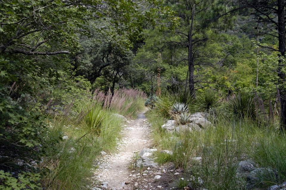 The McKittrick Canyon Trail