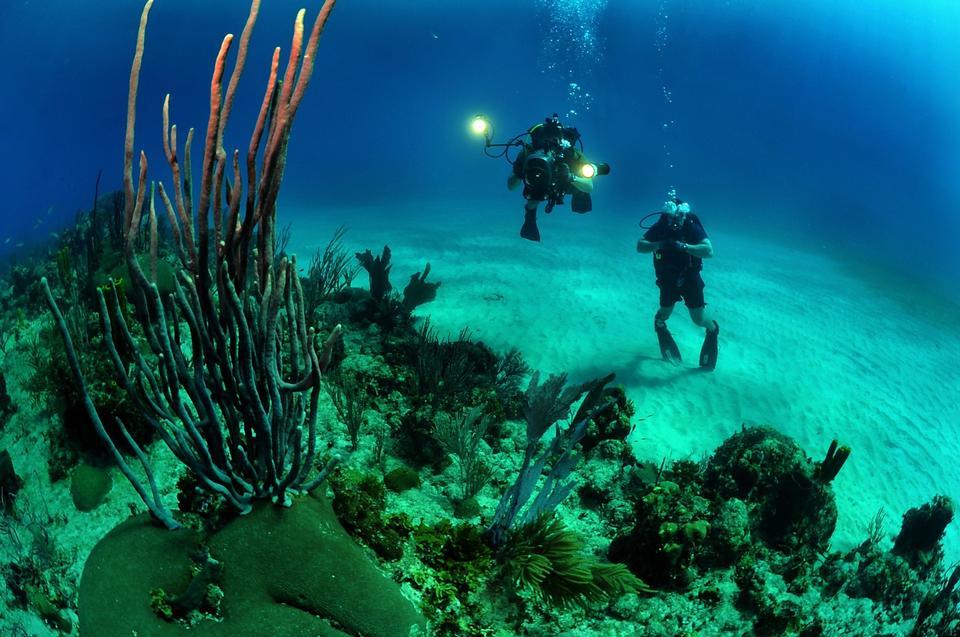 兩個水肺潛水員通過熱帶魚在大海礁游泳