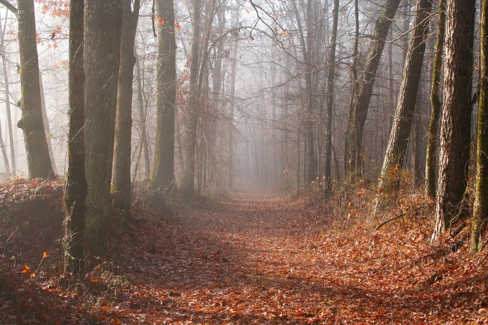 夕暮れ時の美しい秋の森の山道