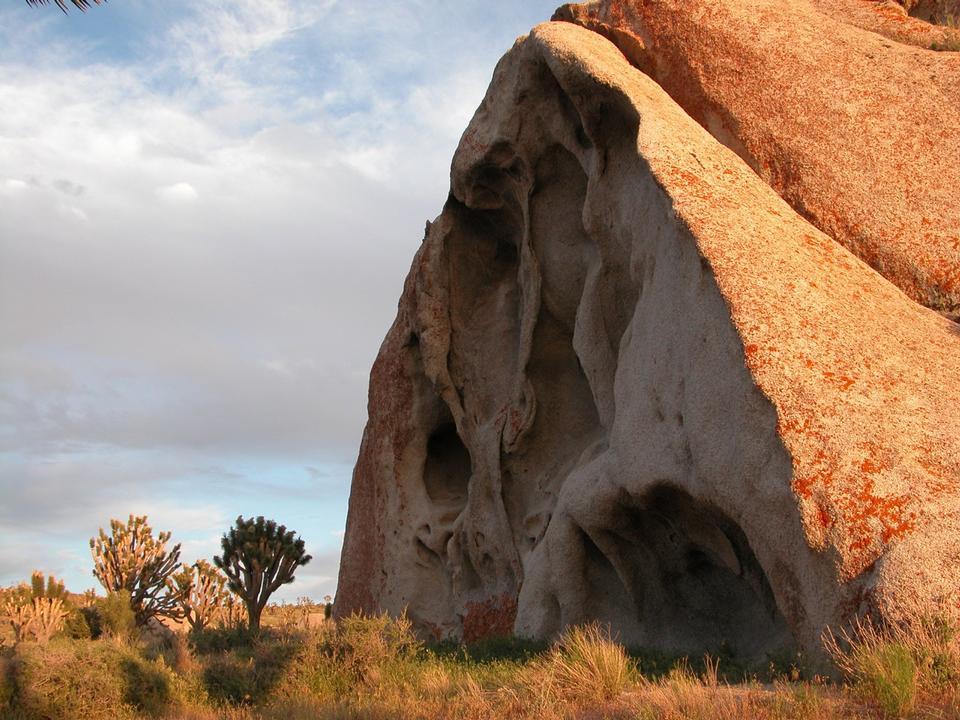 Boulder and Joshua trees on Cima Dome
