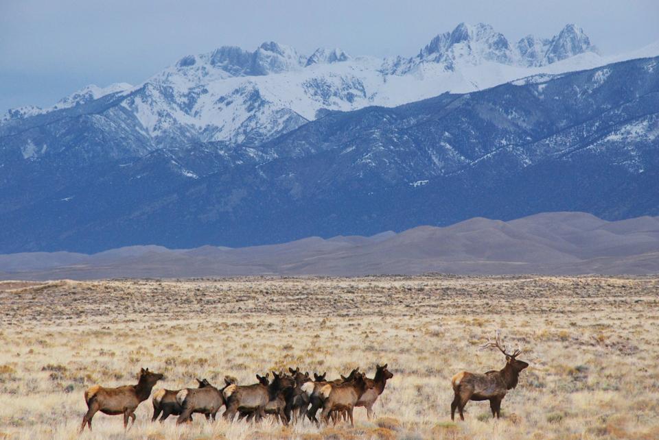 麋鹿追风,沙丘和克雷斯通峰