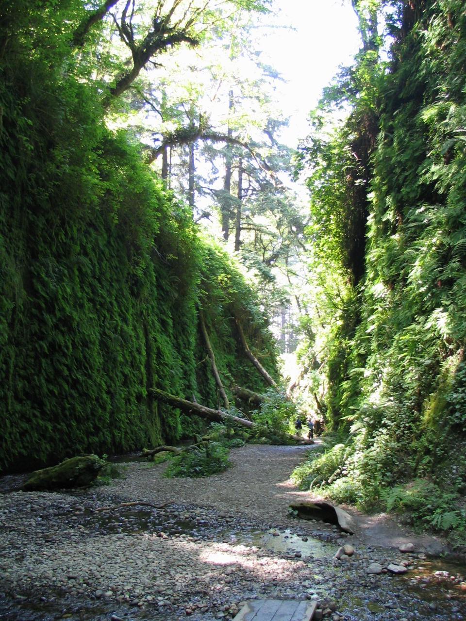 徒步旅行在蕨峡谷