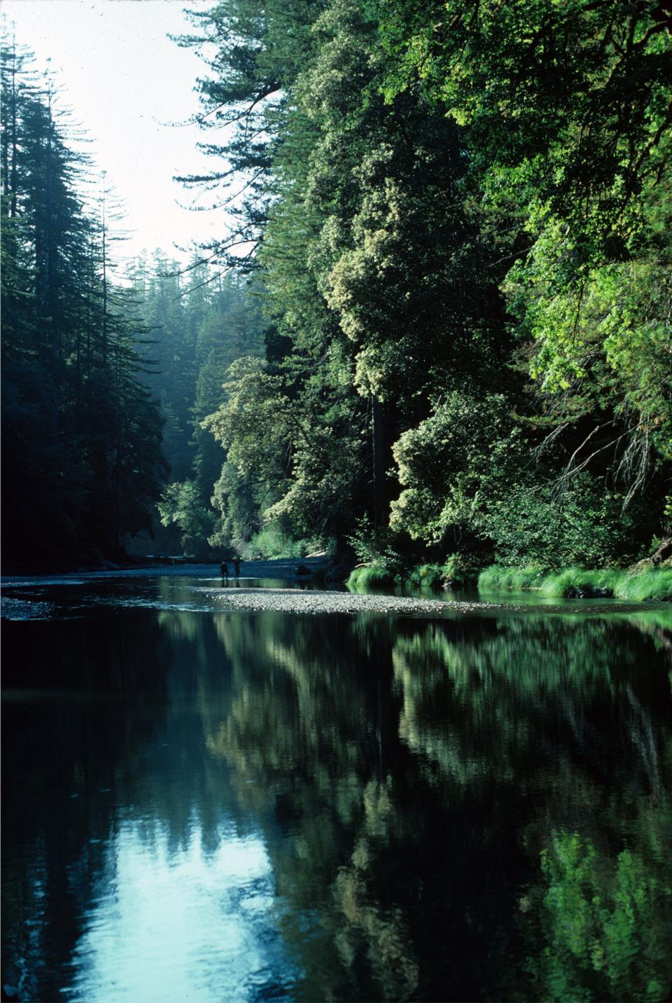 Redwood Creek Senderismo