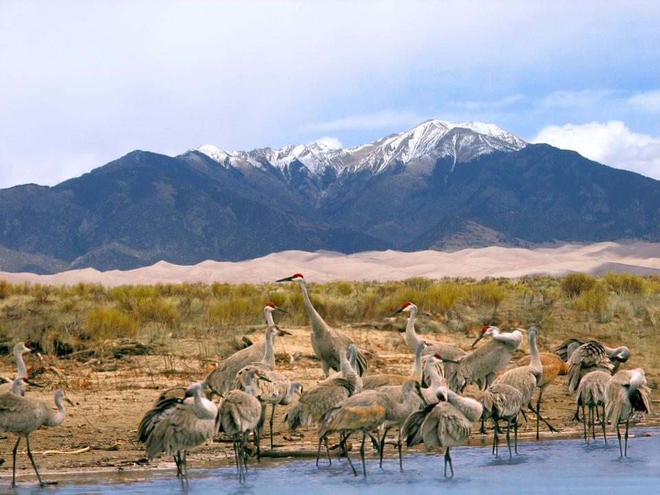 Sandhill Cranes, Dunes, and Mt. Herard
