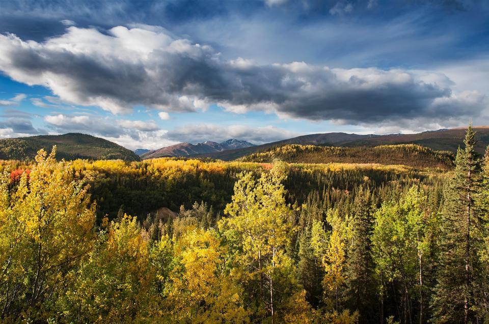 Parque Nacional de Gobierno Colina Denali de Alaska
