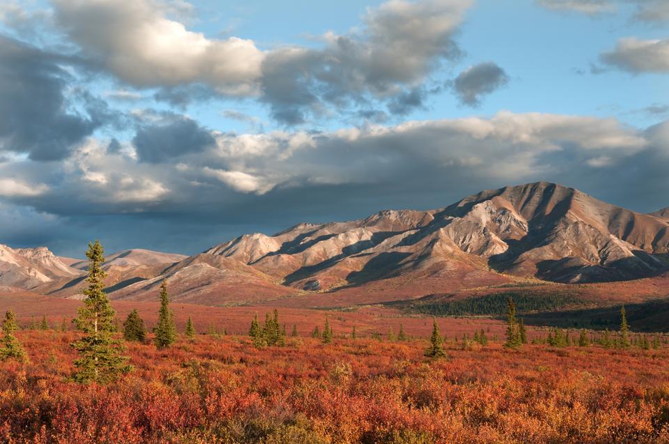 Vorder Country- Alaska Range in rot Denali Nationalpark