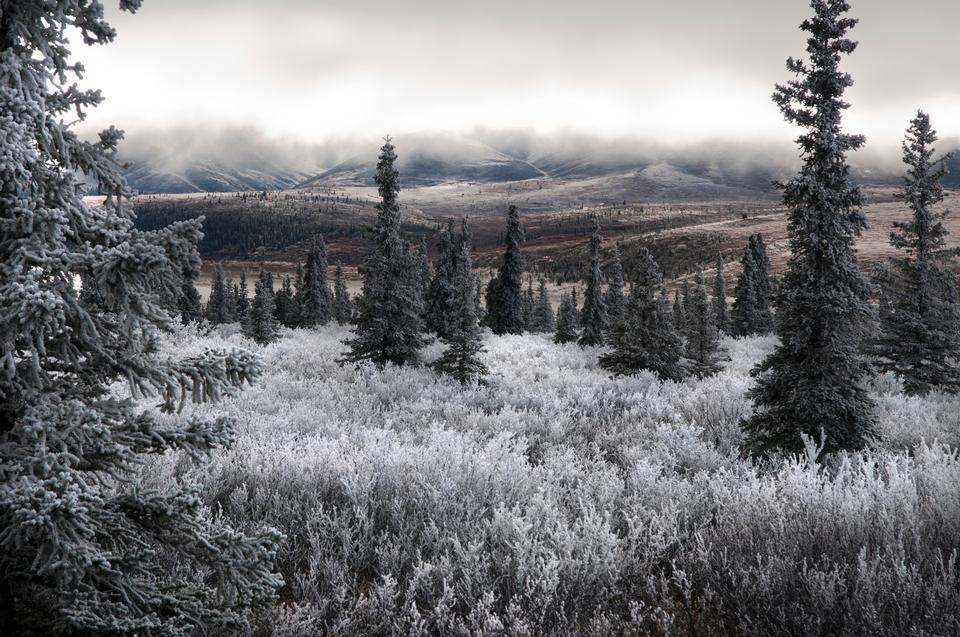 Cordillera de Alaska - Parque Nacional Denali