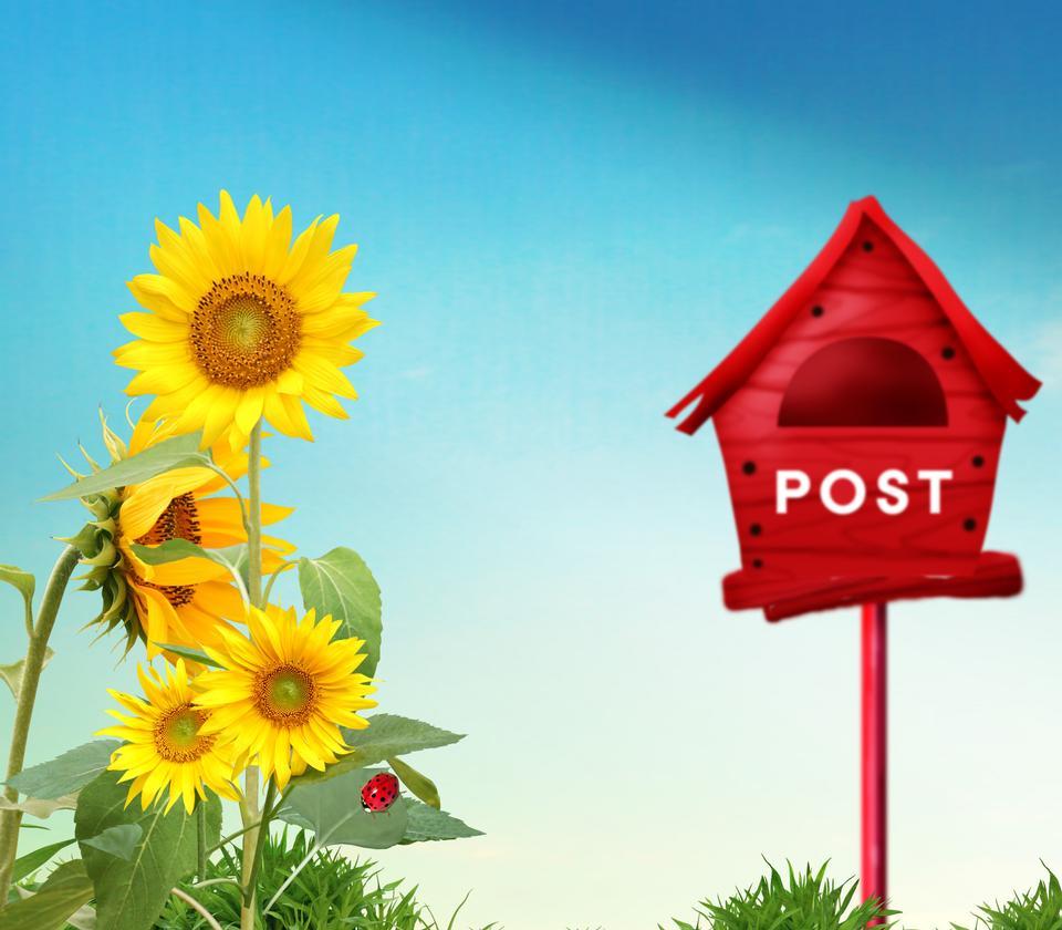 Bella grande giallo girasole e Postbox