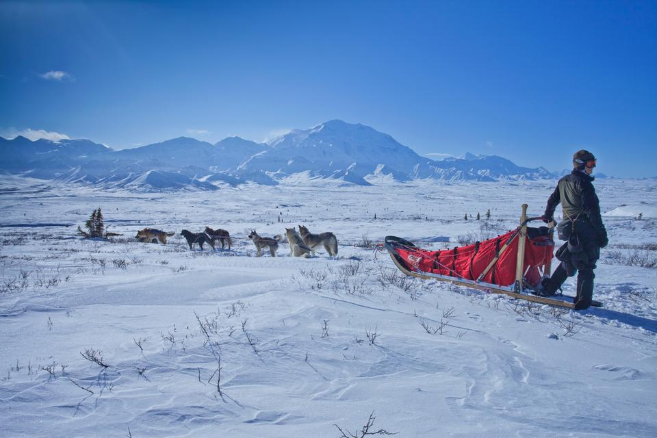 Dog sledging trip in cold snowy winter