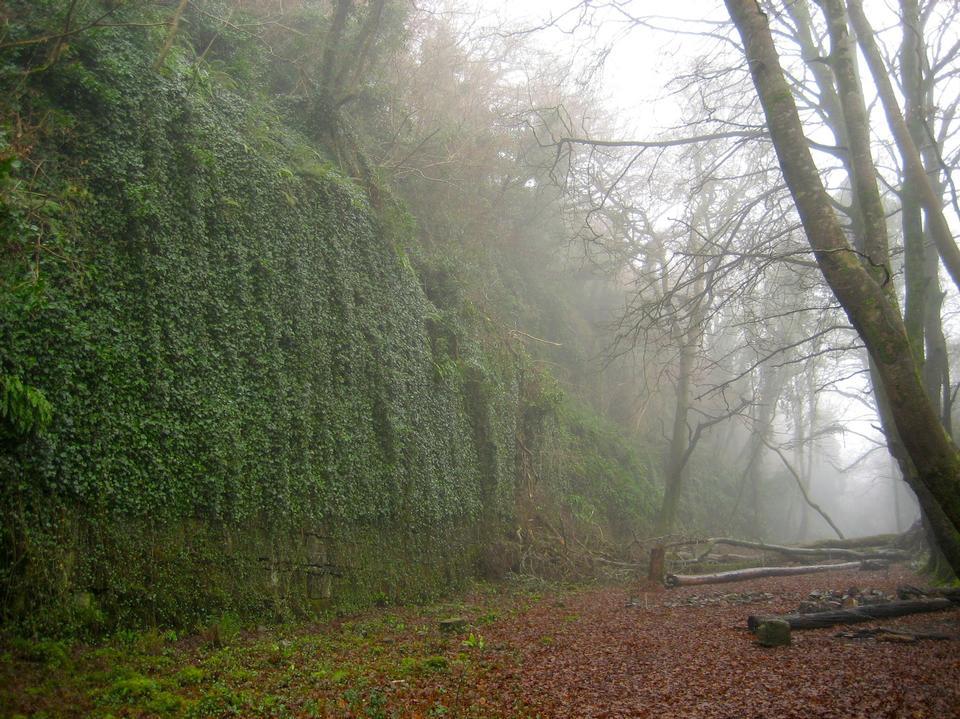 朝霧の森の中の田舎の道