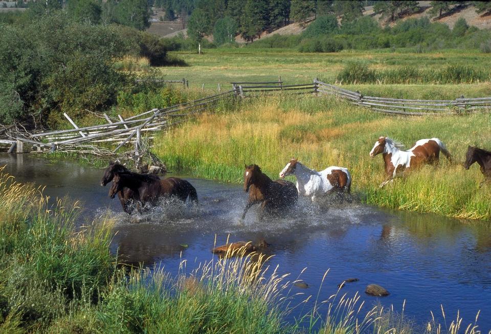 caballos corrientes y el río